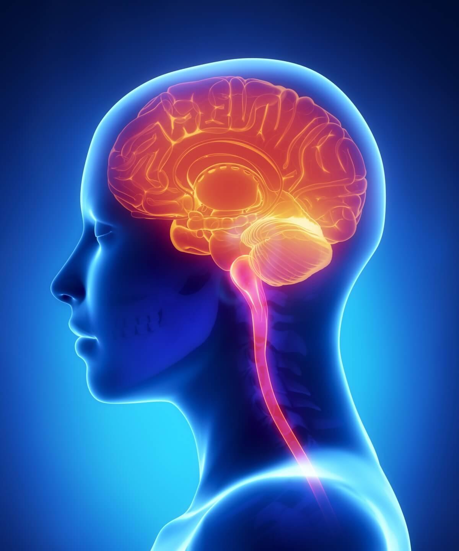 Lage des Gehirns im menschlichen Körper