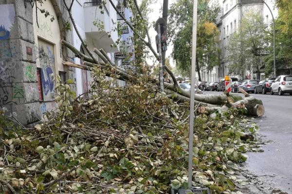 Schäden nach Sturm, über dts Nachrichtenagentur