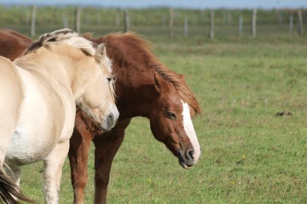 Pferde, über dts Nachrichtenagentur