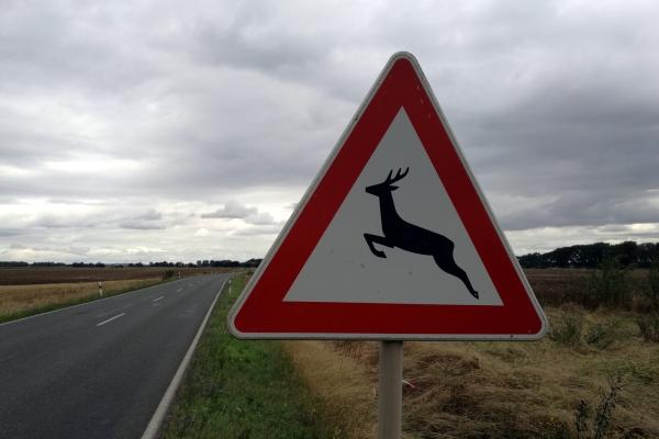 Warnschild vor Wildwechsel, über dts Nachrichtenagentur