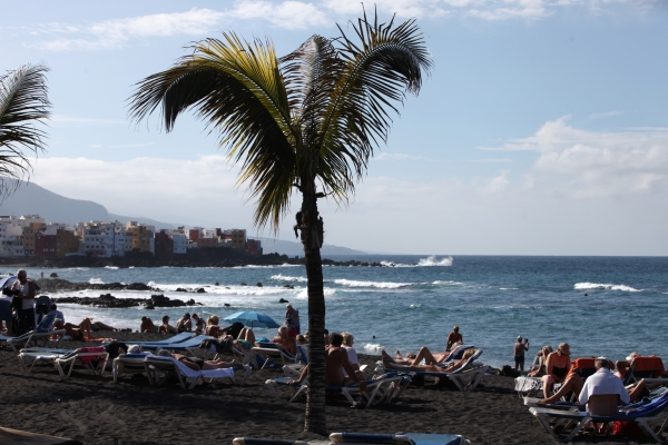Palme an einem Strand, über dts Nachrichtenagentur