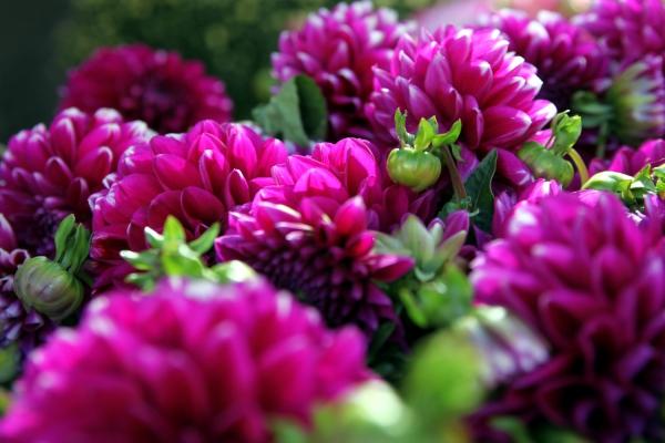 Blumen, über dts Nachrichtenagentur
