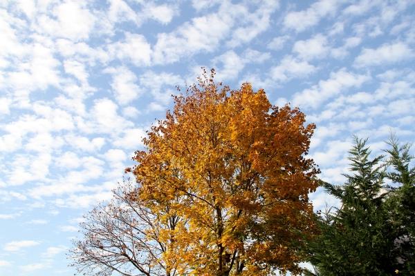 Herbstlicher Baum, über dts Nachrichtenagentur